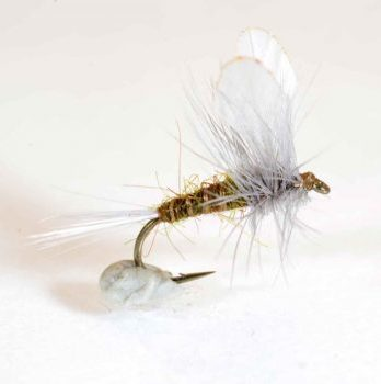 bwo burn wing dun 16